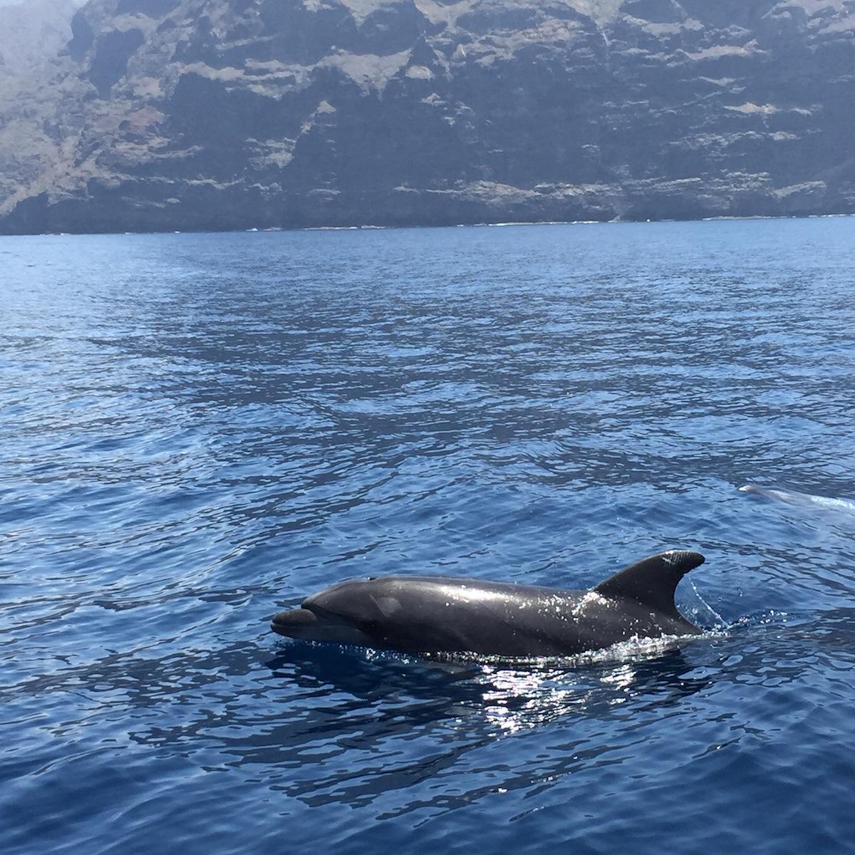 delphin_boot_teneriffa