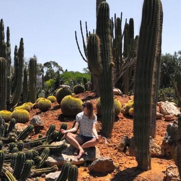 wochen-challenge suelovesnyc_blog_botanicactus_mallorca_meditieren_wochen_challenge_wochenchallenge
