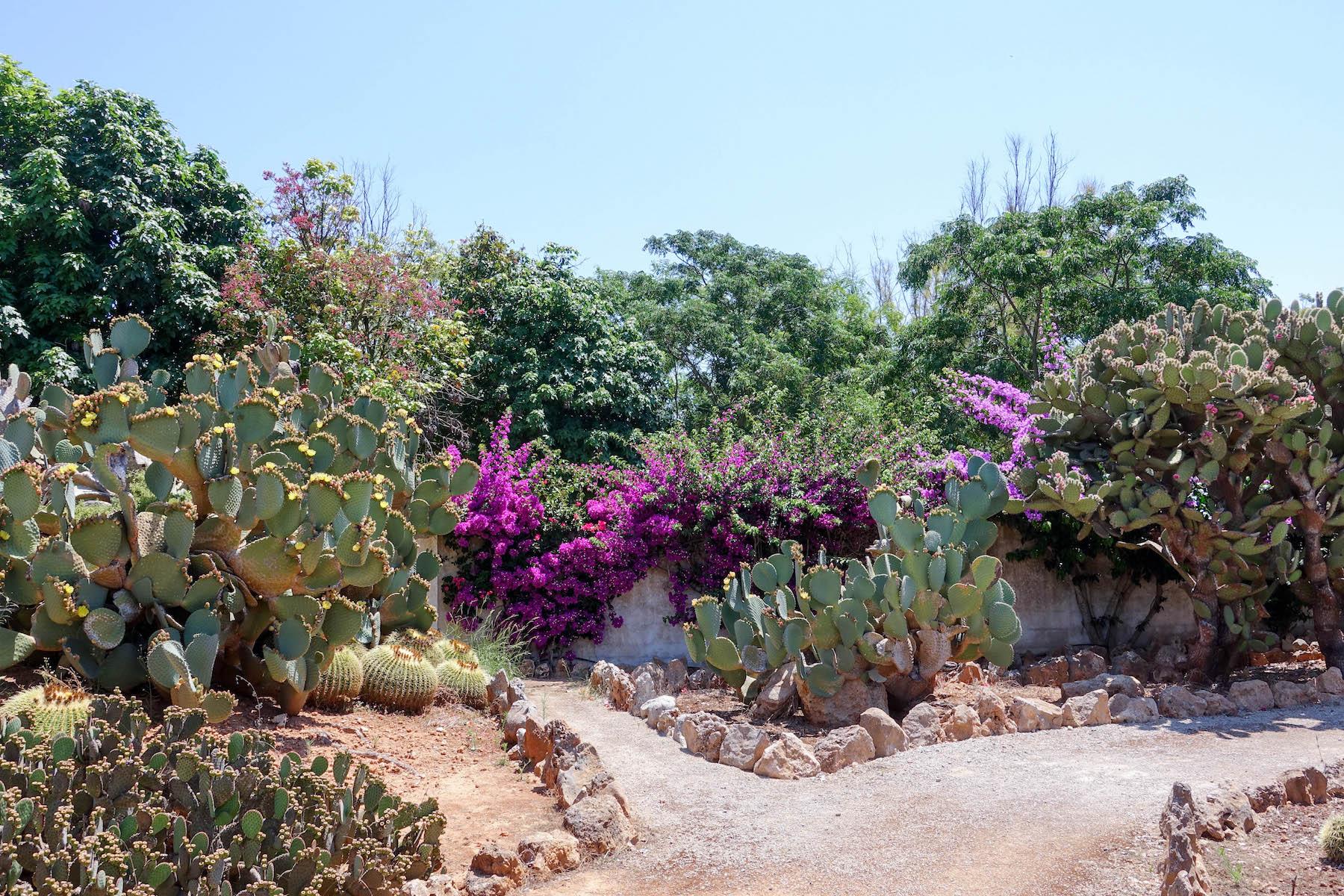 suelovesnyc_susan_Fengler_botanicactus_mallorca_kaktus_botanischer_garten_mallorca