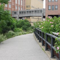 suelovesnyc_blog_the_highline_park_new_york_city the highline park New York