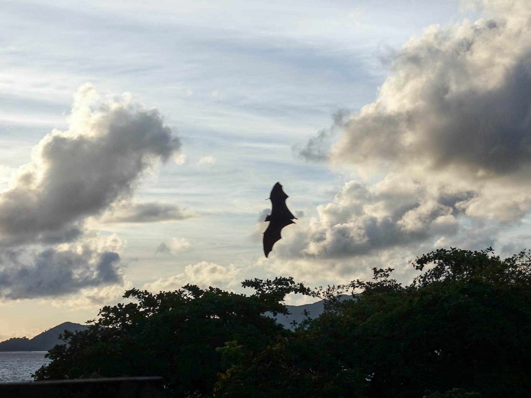 suelovesnyc_susan_fengler_reise_blog_Seychellen_la_digue_gflughund