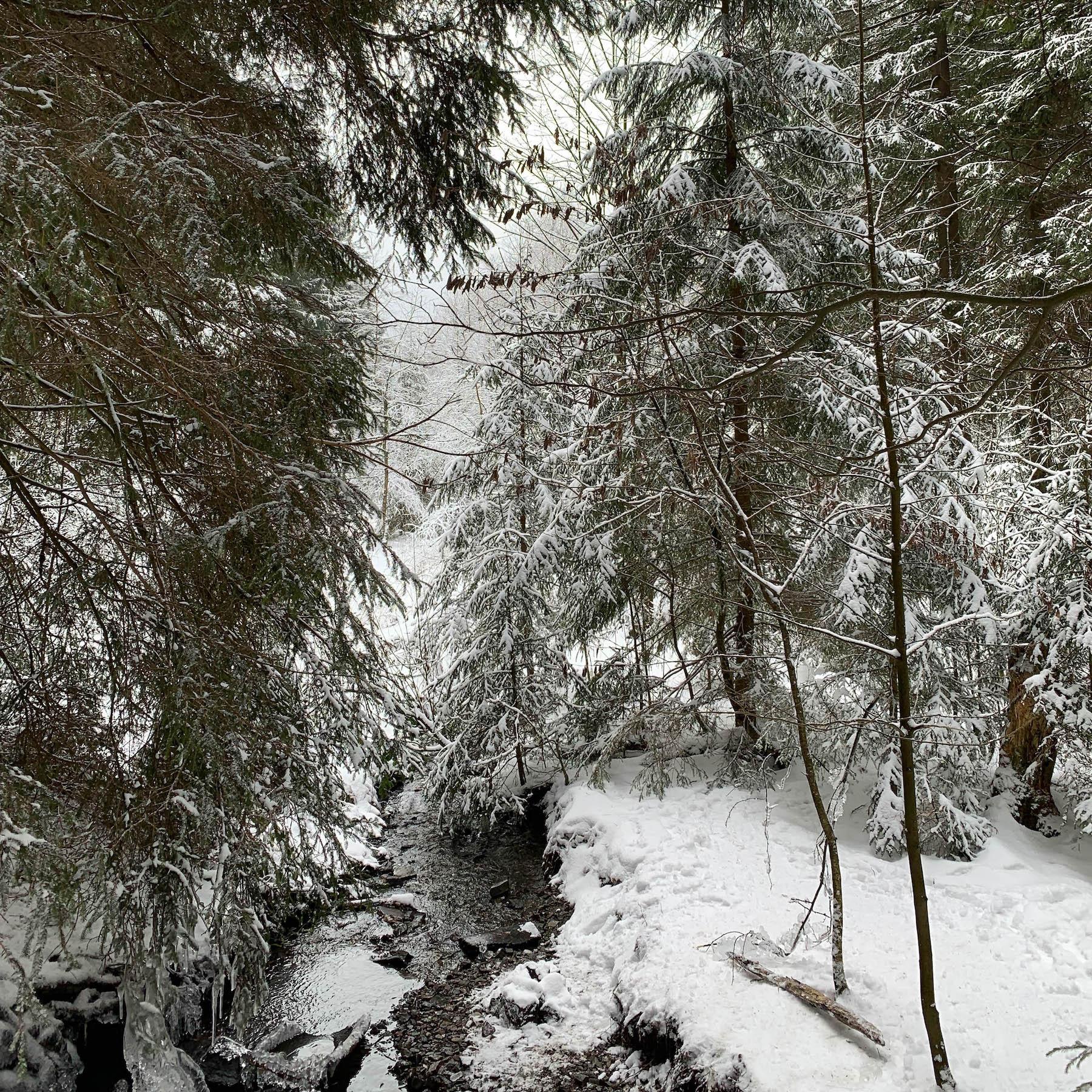Rodeln im Harz Hahnenklee Suelovesnyc_Rodeln_im_harz_hahnenklee_schnee_winterspaziergang