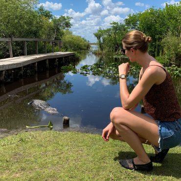 Florida everglades alligator suelovesnyc_everglades_florida_alligator