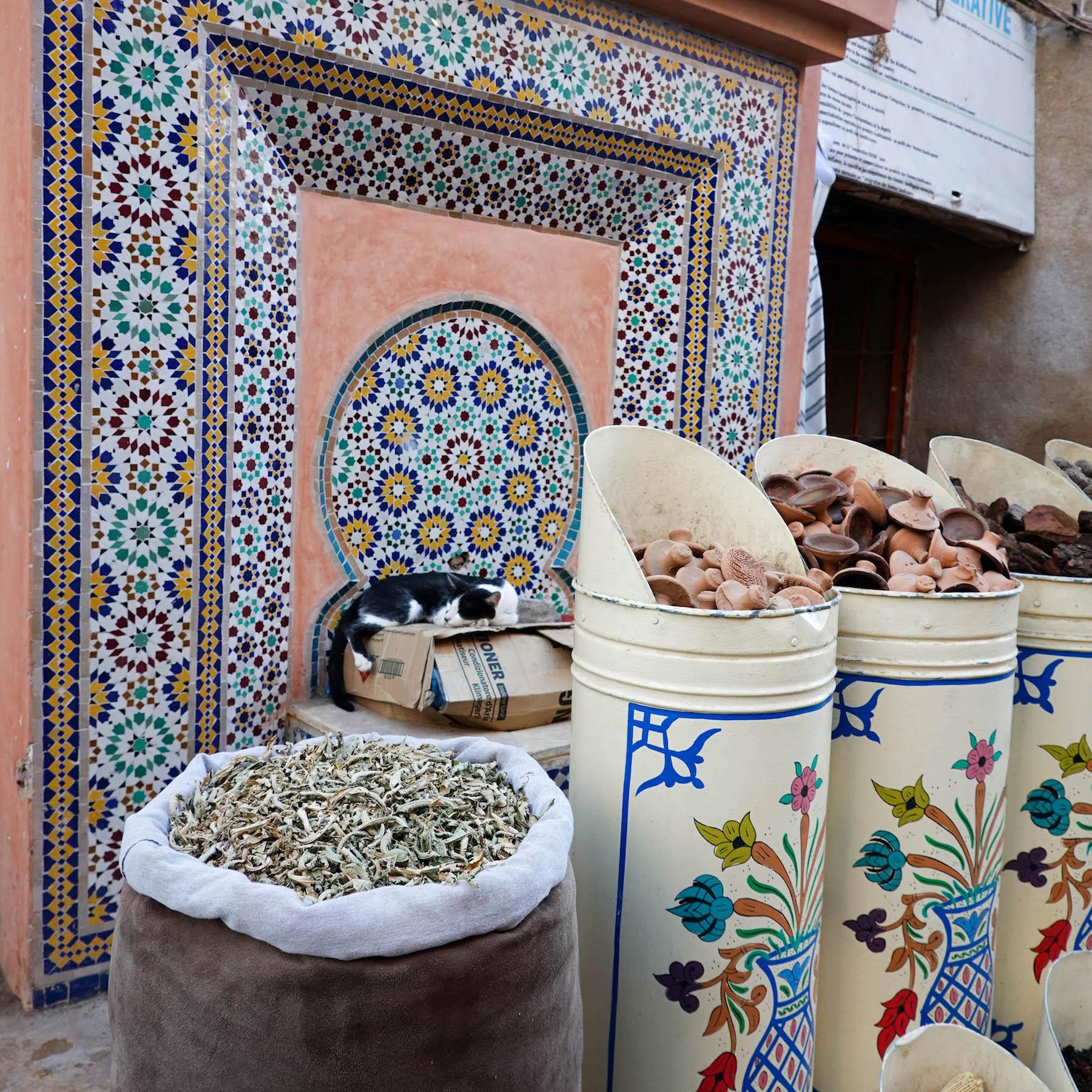 monat suelovesnyc_marrakesch_marrakech_souks_katze_weekly_update_monat_blog marrakesch