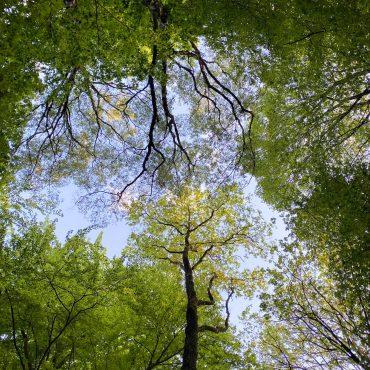 Waldbaden suelovesnyc_waldbaden_achtsamkeit_stressbewaltigung_stress_wald