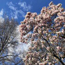 suelovesnyc_hamburg_entscheidung_fur_mich_weekly_update_magnolien_Hamburg