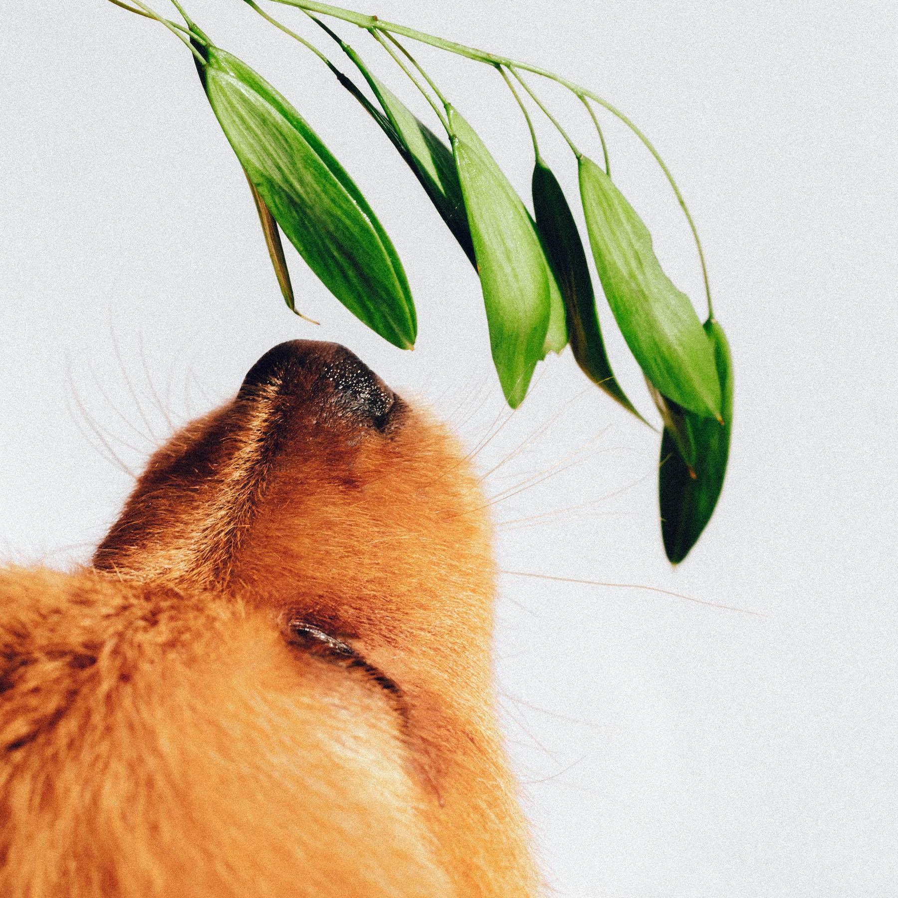 life at 30 susan fengler hund suelovesnyc_life_at_30_Hund_kind_kolumne_Susan_Fengler